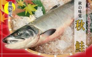 秋鮭(生鮭)