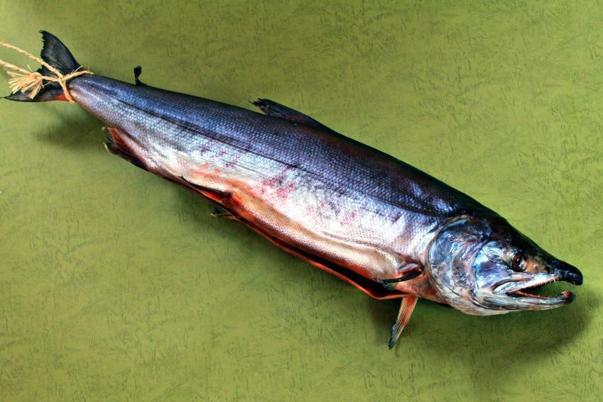 塩引lき鮭