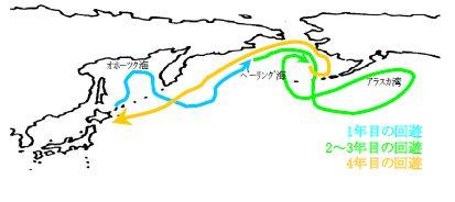 白鮭繁殖後のいろいろな肥育・回遊海域